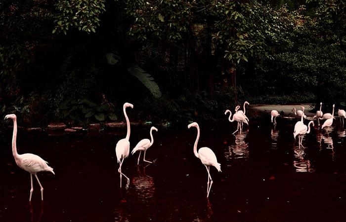 China Guangzhou Zoo